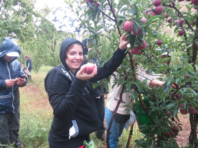 Apple Picking Harissa 28-09-2014